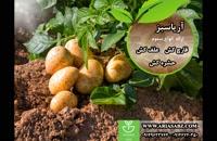 Infinito | اینفینیتو | قارچ کش تخصصی مزارع سیب زمینی | 100درصد تضمینی