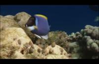 سیاره آبی 5 - The Blue Planet ۲۰۰۱