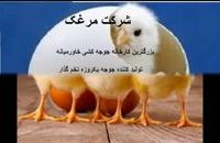 فروش جوجه یک روزه تخمگذار