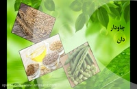 Folicur | قارچ کش خارجی و تضمینی بذر کتان | فولیکور