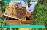 زنبورداری مدرن از صفر تا صد | محصور کردن ملکه