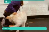 نحوه تربیت سگ برای آوردن وسایل