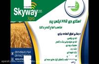 قارچ کش اسکای وی 285 ایکس پرو | Skyway xpro درمان قطعی انواع بیماری گندم