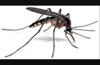 فروش سموم حشرات تضمینی بایر سم