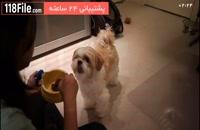 آموزش تربیت سگ