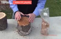 پرورش قارچ گانودرما در خانه