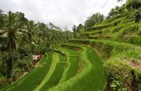بهترین جاذبه گردشگری بالی | منطقه اوبود | تورنت
