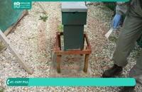 آموزش حرفه ای زنبورداری از ابتدا تا انتها
