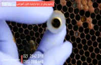 مجموعه آموزش زنبورداری بصورت کامل