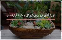 50ترفند پرورش گل و گیاه تزئینی در منزل