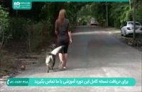تربیت سگ ژرمن شپرد برای حفاظت از صاحب خود
