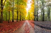 آموزش ادیت حرفه ای عکسهای پاییز