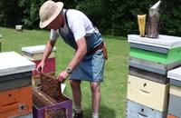 072023 - زنبورداری سری اول
