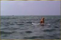 نجات دادن سگ توسط دلفین