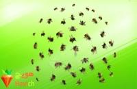 آموزش زنبورداری | فیلم آموزشی