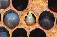 072026 - زنبورداری سری اول