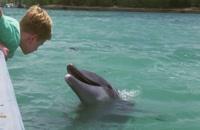 دانلود زیرنویس فارسی فیلم Dolphin Kick 2019