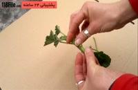 3 راز پرورش گل و گیاه زینتی داخل خونه