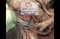 برترین و تخصصی ترین  مراکز درمانی در البرز 09121623463|گفتار توان گستر البرز