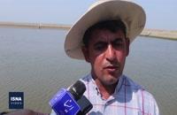ماجرای متفاوت پرورش میگو در استان هرمزگان