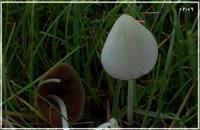 پرورش قارچ  از صفر تا صد