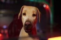 انیمیشن سگ های انتقام جو 2019 دوبله فارسی Avenger Dogs
