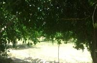 چاه نلی گرین گیبلز
