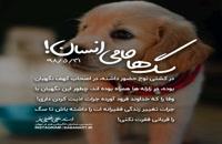 سگ ها را از فقرت نکش! | استاد علی خلیلی فر