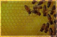 آموزش زنبورداری در تهران - آموزش