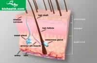 نشانهها و روشهای درمان بیماری پوست مرغی یا کراتوزیس پیلاریس - بیچشک
