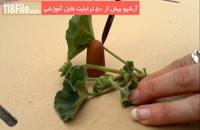 5 روش قلمه زنی گیاهان