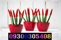 دستگاه مخمل پاش /پودر فلوک 09387400338