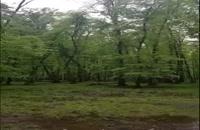 سبز، فقط سبز درختها در فروردین