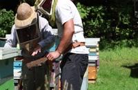 072031 - زنبورداری سری اول
