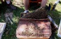 072033 - زنبورداری سری اول