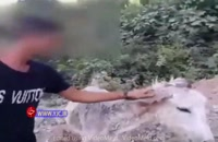 حیوان آزاری تلخ - آزار و اذیت یک الاغ