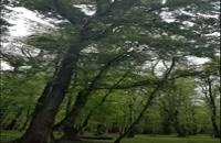 بازی و جنگل