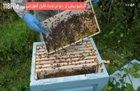آموزش زنبورداری فارسی